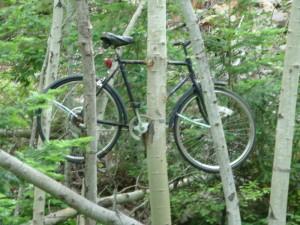 Bike in tree on trail